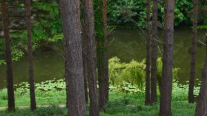 Trattamento e uso naturale del legno: filosofia e guida